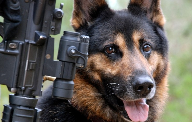 Republican objections effectively neutered a bill to care for military war dogs