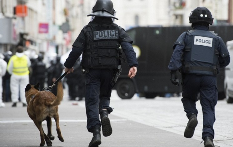 Russia to send police pup to France after dog killed in Paris siege