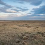 Northern Grasslands - Great Plains