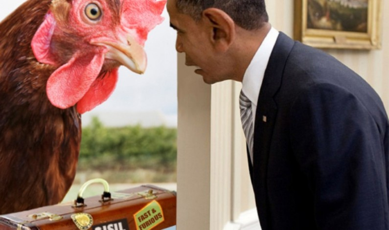 Could those chickens be coming home to roost?