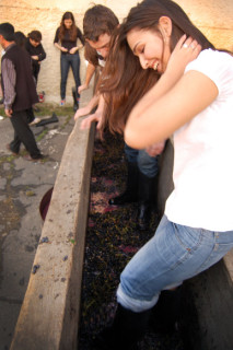 Russia's grape harvest
