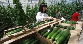 Russia's natural resources of land and water, combined with high technology will make it a giant food producer