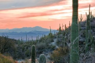 South West American Desert