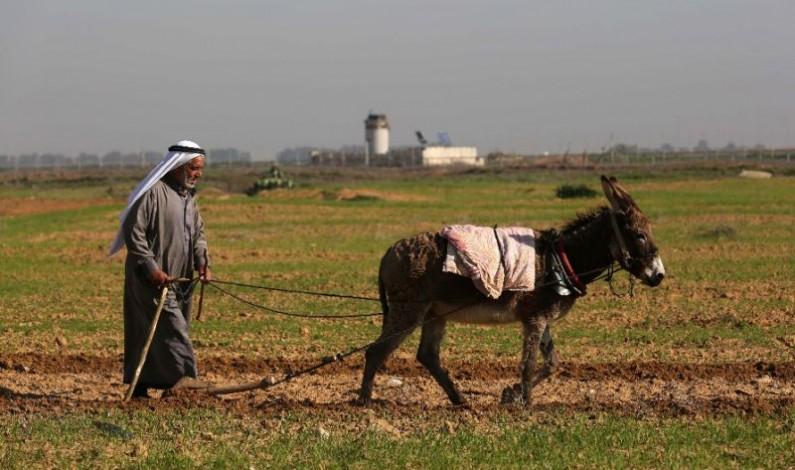 Gaza farmers demand IDF compensation for herbicide spraying
