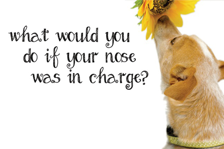 What would you do if your nose was in charge