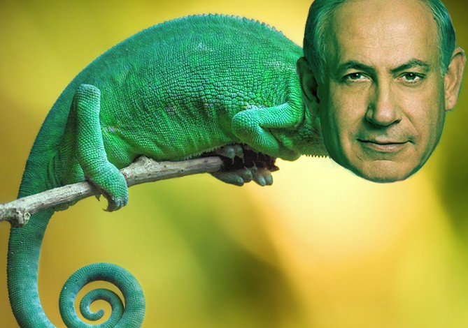 Is Bibi A Lizard?