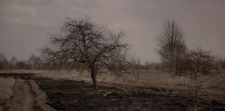 Dead Radioactive Trees Don't Rot. 30 year old dead Rad tree at Chernobyl