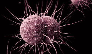 Health Editor's Note: Bacteria that cannot be killed with the antibiotics that used to kill them put mankind on a slippery slope with definitive treatments becoming less to non-existent effective. Gonorrhea is only one of several types of bacteri...