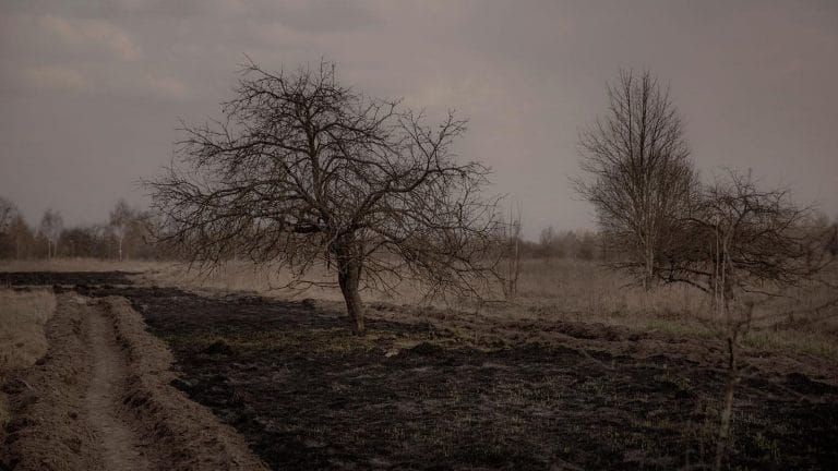 Remember rge Chernobyl Tree? It is Very Dead and Very Radioactive.