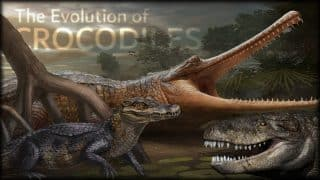 Crocodiles Have Not Changed For 200 Million Years